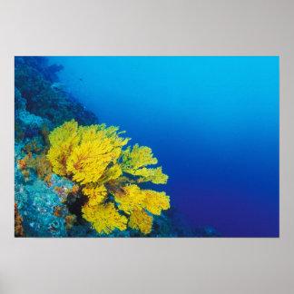 Indonesia, islas de Banda, arrecifes de coral prol Póster