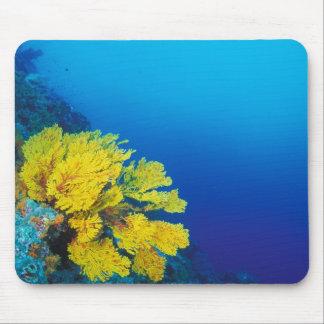 Indonesia, islas de Banda, arrecifes de coral prol Tapetes De Raton