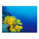Indonesia, islas de Banda, arrecifes de coral Tarjeta Postal