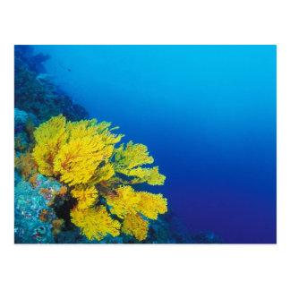 Indonesia, islas de Banda, arrecifes de coral Postal