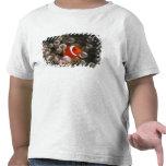 Indonesia, Komodo. Clownfish marrón, o Camiseta