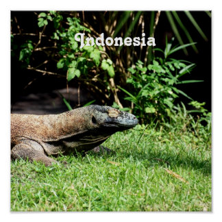 Indonesia Komodo Dragon Poster
