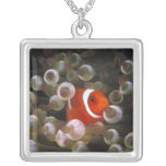 Indonesia, Komodo. Maroon clownfish, or Square Pendant Necklace