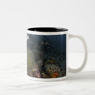 Indonesia, Komodo National Park. Lined Two-Tone Coffee Mug