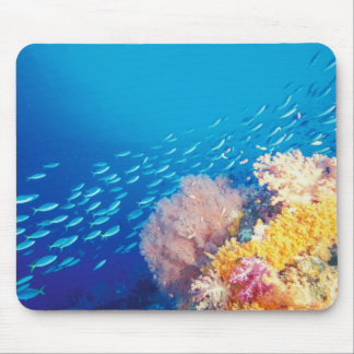 Indonesia, Papua formerly Irian), Misool, Mouse Pad