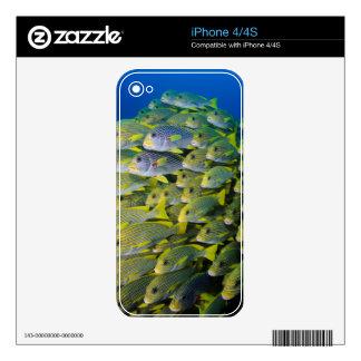 Indonesia. Schooling Fish iPhone 4 Skin