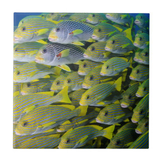 Indonesia. Schooling Fish Tile