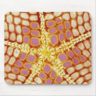 Indonesia. Starfish mouth, detail. Mousepads