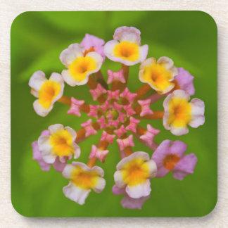 Indonesian Flower Hard Plastic Coasters (set of 6)