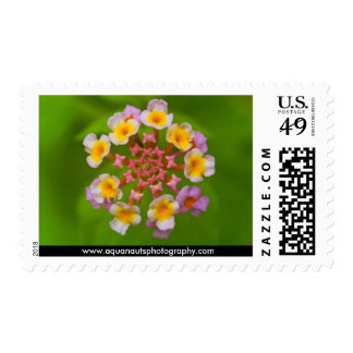 Indonesian Flower Postage Stamps