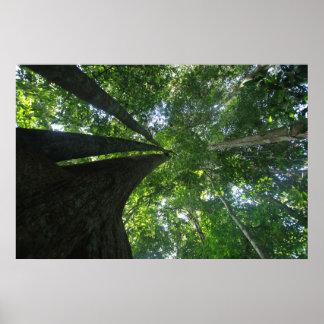 Indonesian rainforest poster