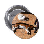 Indoor Tanning Doggy Style Buttons