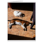 Indoor Tanning Doggy Style Greeting Cards