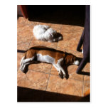 Indoor Tanning Doggy Style Post Card