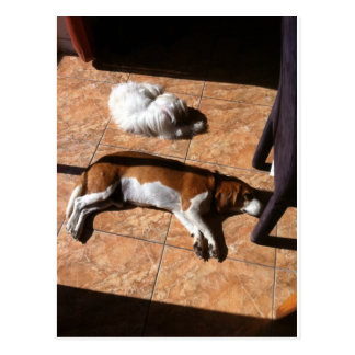 Indoor Tanning Doggy Style Postcard