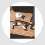 Indoor Tanning Doggy Style Stickers