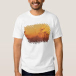 Industrial sunrise shirts