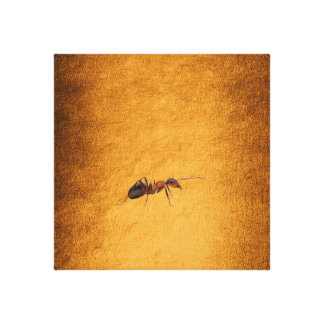 Industrious Like the Ant Golden Background Canvas Print
