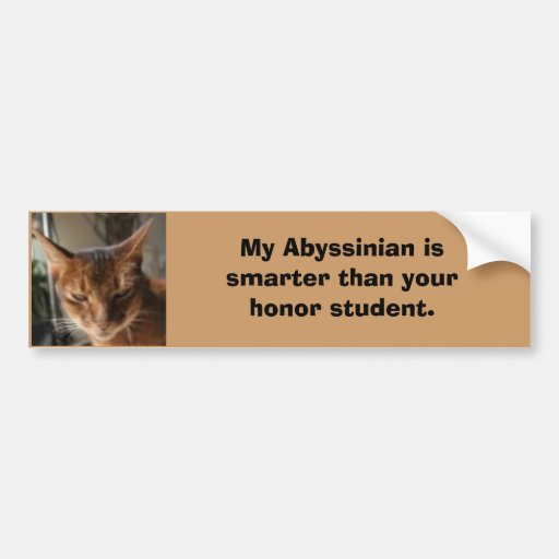indy, My Abyssinian is smarter tha... - Customized Bumper Stickers