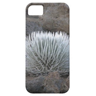 Infamous Maui Silversword Plant iPhone Case iPhone 5 Cases