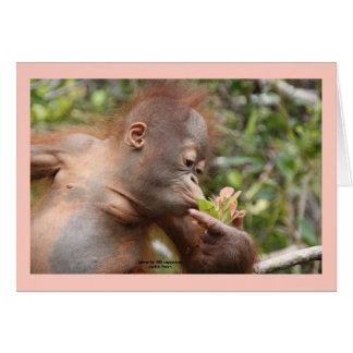 Infant Orangutan With Tropical Flower Greeting Cards