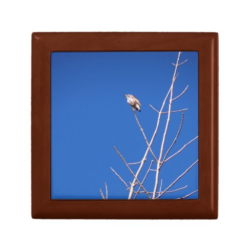 Infant Wood Thrush Jewelry Boxes