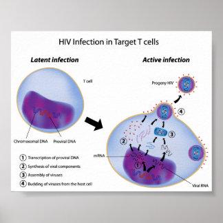 Infección latente y activa por el poster del VIH