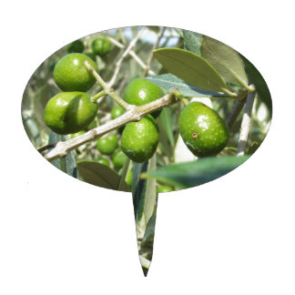 Infested olive tree by olive fruit fly cake topper