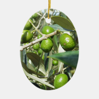 Infested olive tree by olive fruit fly ceramic ornament