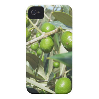 Infested olive tree by olive fruit fly iPhone 4 case