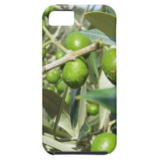 Infested olive tree by olive fruit fly iPhone SE/5/5s case