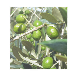 Infested olive tree by olive fruit fly notepad