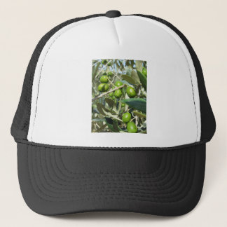 Infested olive tree by olive fruit fly trucker hat
