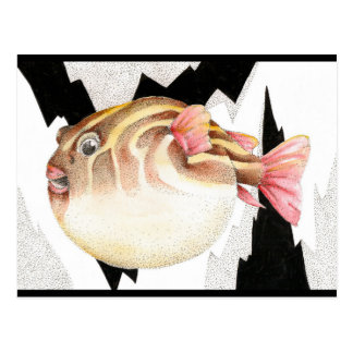 Inflated Pufferfish Postcard