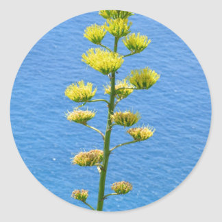 Inflorescence of Agave plant. Classic Round Sticker