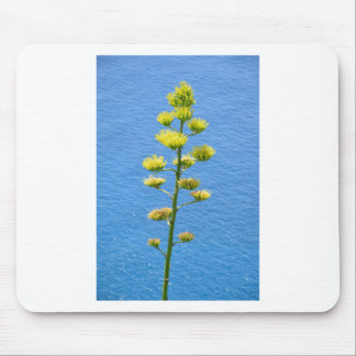Inflorescence of Agave plant. Mouse Pad