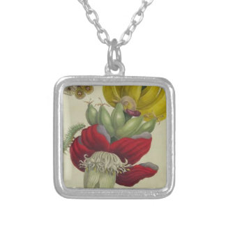 Inflorescence of Banana by Maria Sibylla Merian Silver Plated Necklace