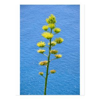 Inflorescencia de la planta del agavo tarjeta postal