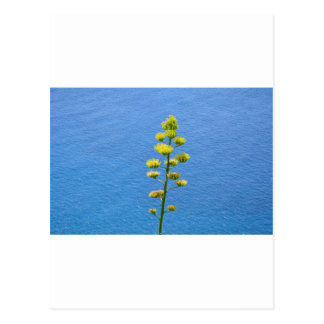 Inflorescencia de una planta del agavo tarjetas postales