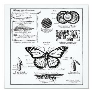 """Información de la mariposa de monarca invitación 5.25"""" x 5.25"""""""