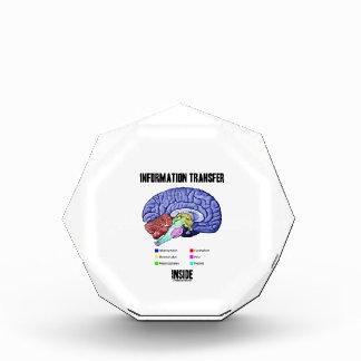 Information Transfer Inside (Brain Anatomy) Acrylic Award