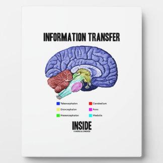 Information Transfer Inside (Brain Anatomy) Plaque