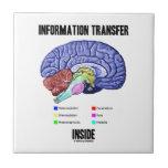 Information Transfer Inside (Brain Anatomy) Tile