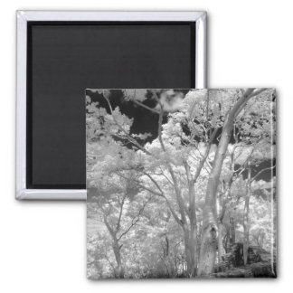 Infra red of trees buildings and trails in Las 2 Magnet