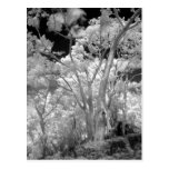 Infra red of trees buildings and trails in Las 2 Postcard