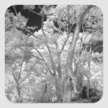 Infra red of trees buildings and trails in Las 2 Square Sticker