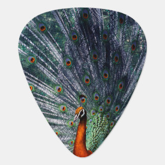 Infra Red Peacock Guitar Pick