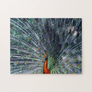 Infra Red Peacock Puzzle