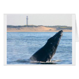 infracción de la ballena jorobada tarjeta pequeña