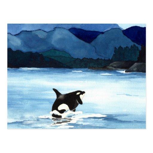 Infracción de la orca postal